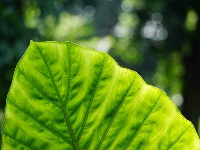 leaf, plant, dew